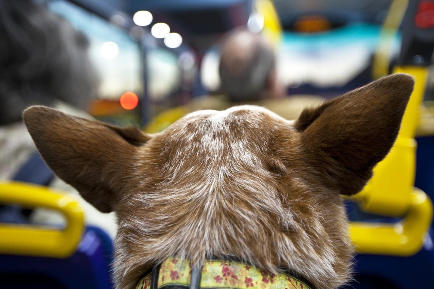 Правила провоза животных в междугородних автобусах